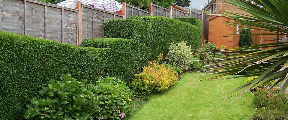 Ace Garden Maintenance
